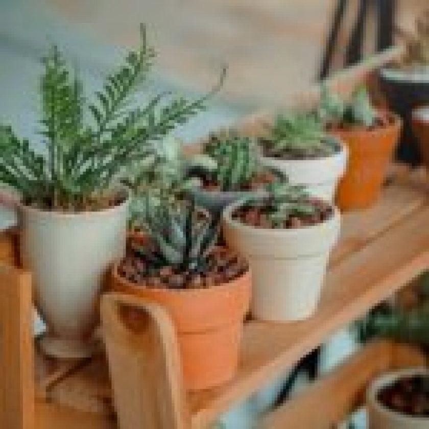 diy flower pot ideas