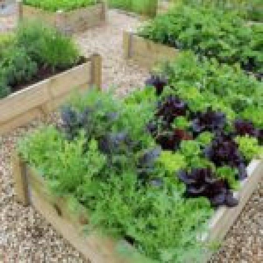 grow vegetable