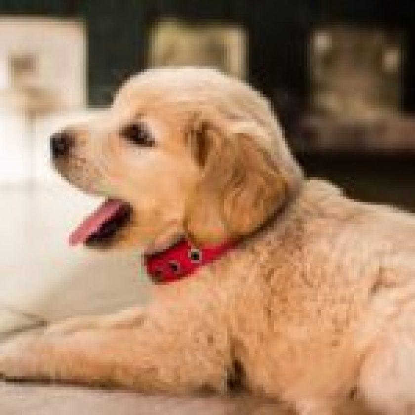 make-your-home-pet-friendly