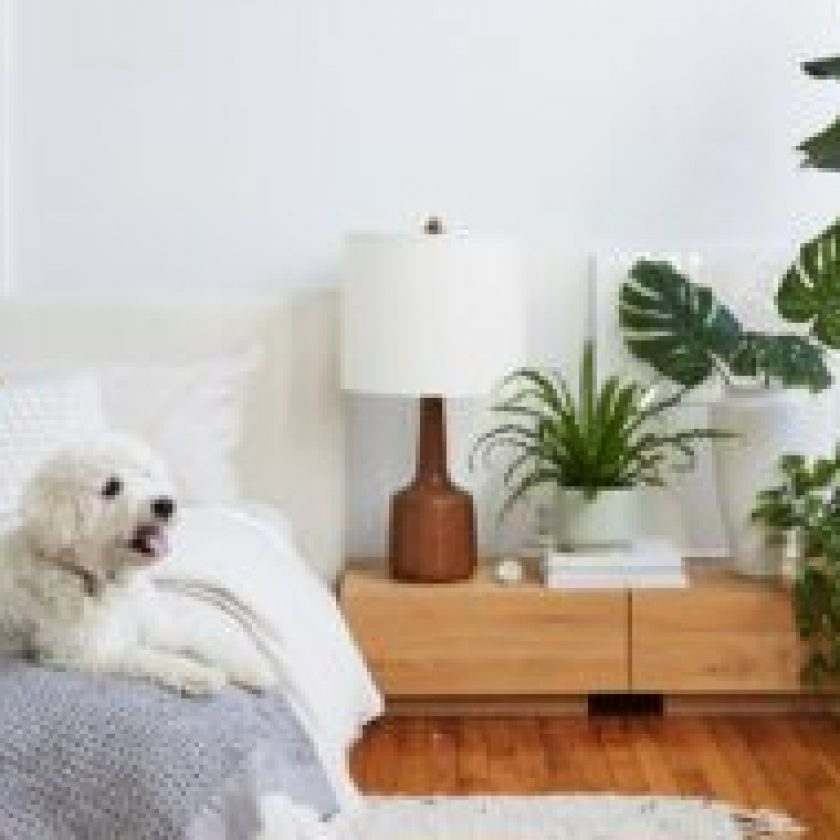 petfriendly home