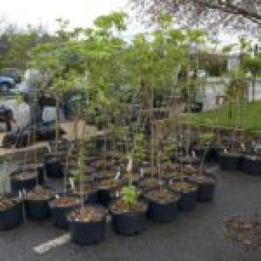 planting tree